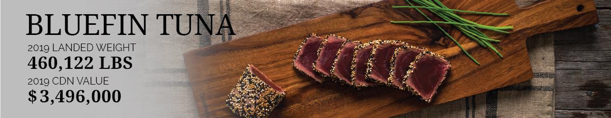 Bluefin Tuna Statistics 2019