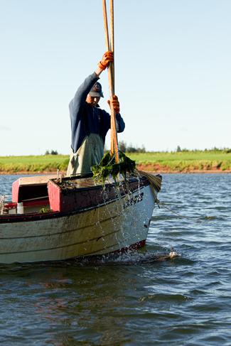 Wild Oyster Fisherman