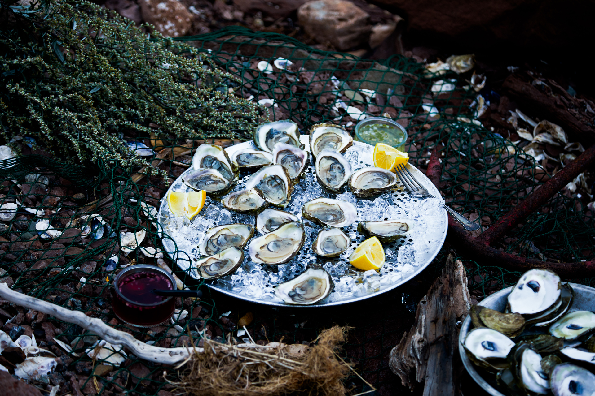 Plate of wild oysters on rocks